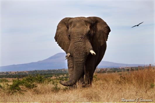 elephants_rr