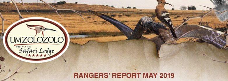 Rangers Report – May 2019